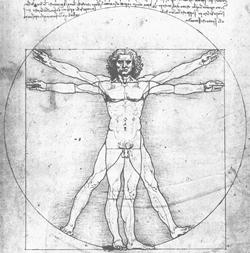 der vitruvianische Mensch von Leonardo da Vinci